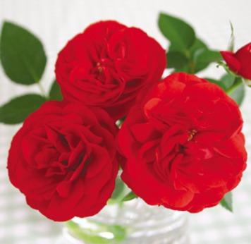 一緒に人々の心に響く花を作りましょうご応募をお待ちしています!
