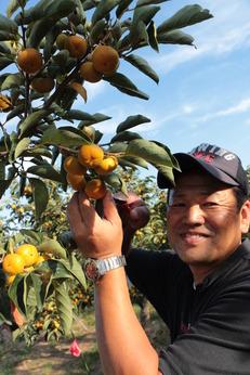 日本一の柿農家で働きながら学びませんか?